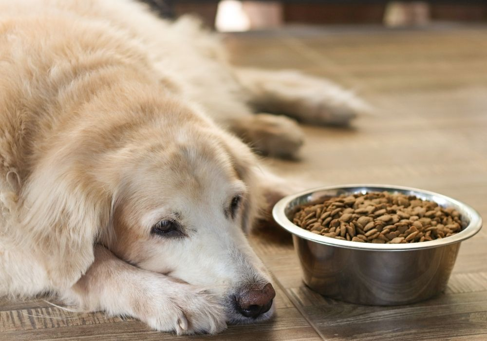 dog-upset-stomach-food-sensitivity