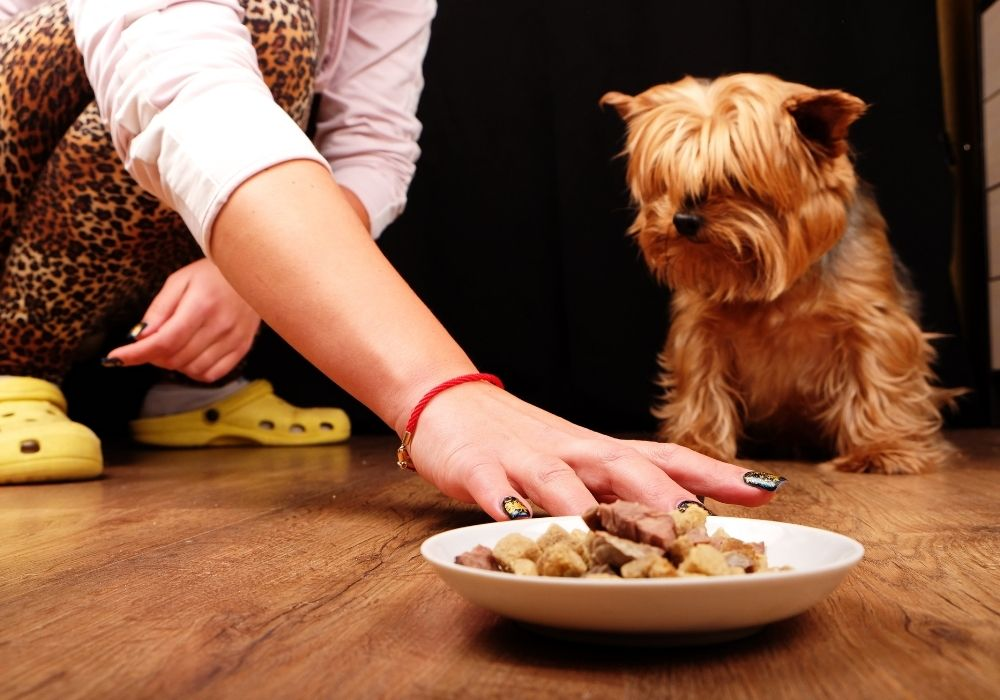 dog-wont-eat-food