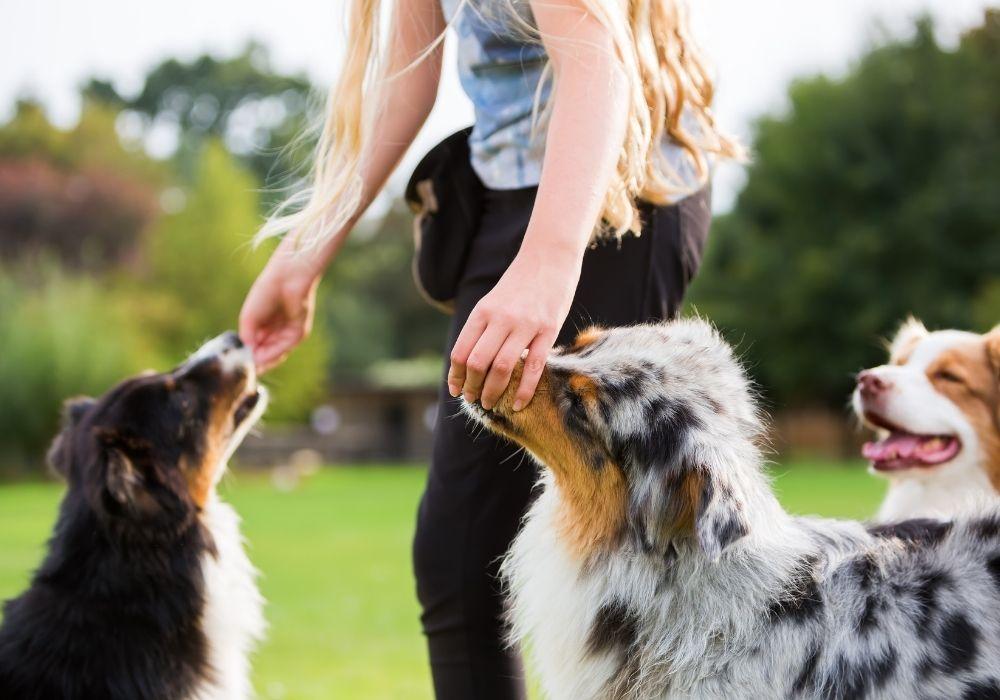 giving-dog-treats