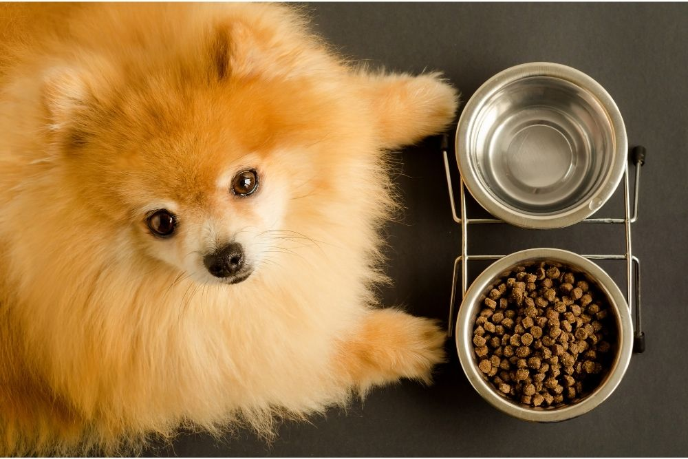 how-often-you-should-feed-a-dog