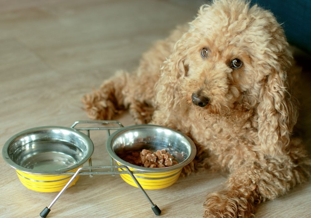 how-to-get-your-dog-to-start-eating-again