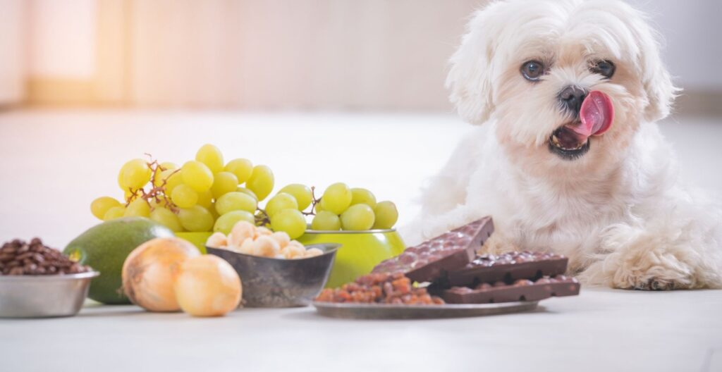 human-foods-that-are-toxic-to-dogs