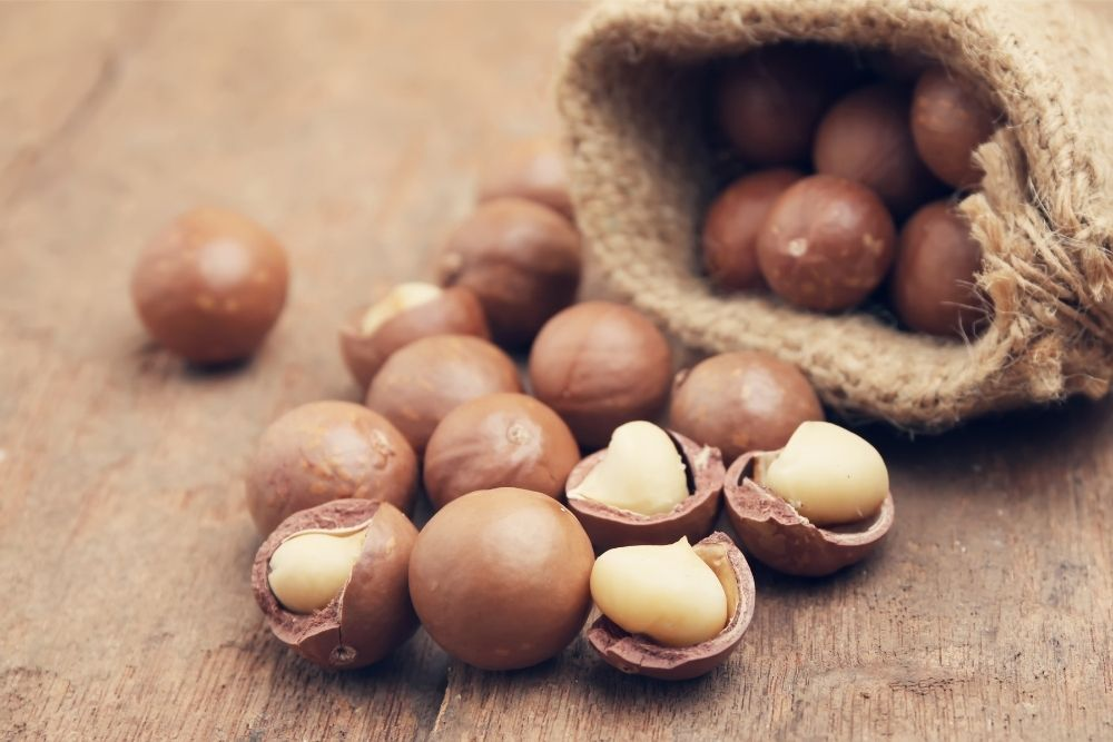 macadamia-nuts-toxic-to-dogs