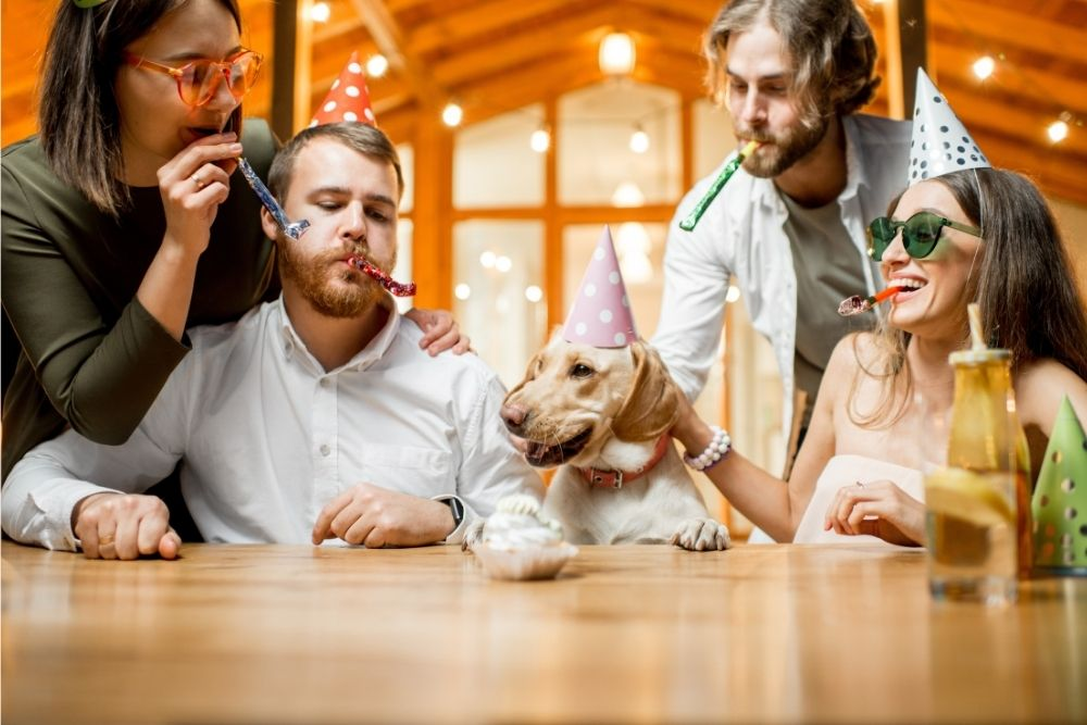 dog-activity-birthday-party