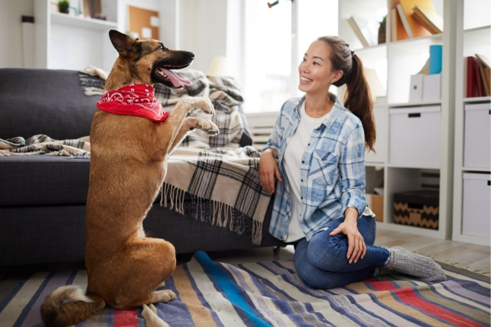 dog-fun-activities-teach-tricks