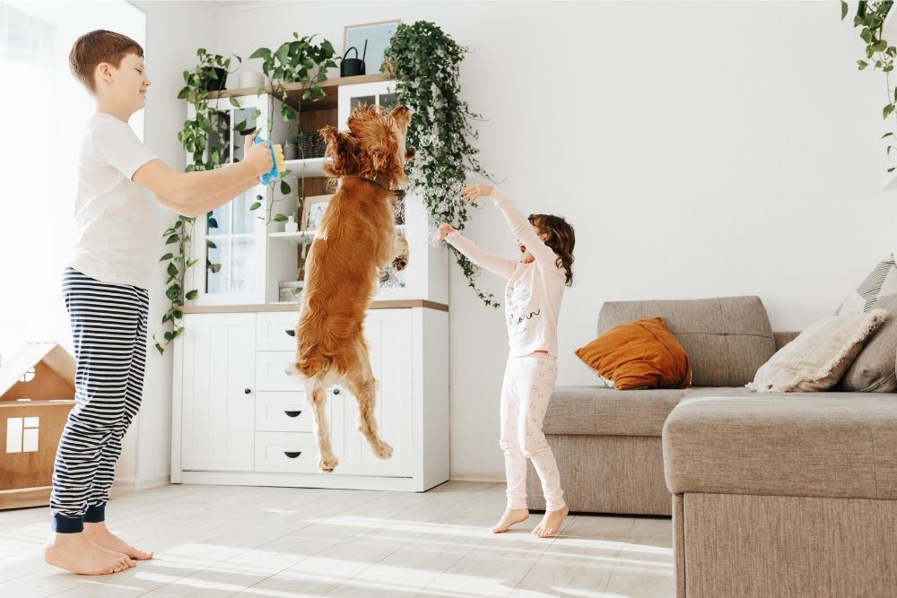 dog-fun-play-with-bubbles