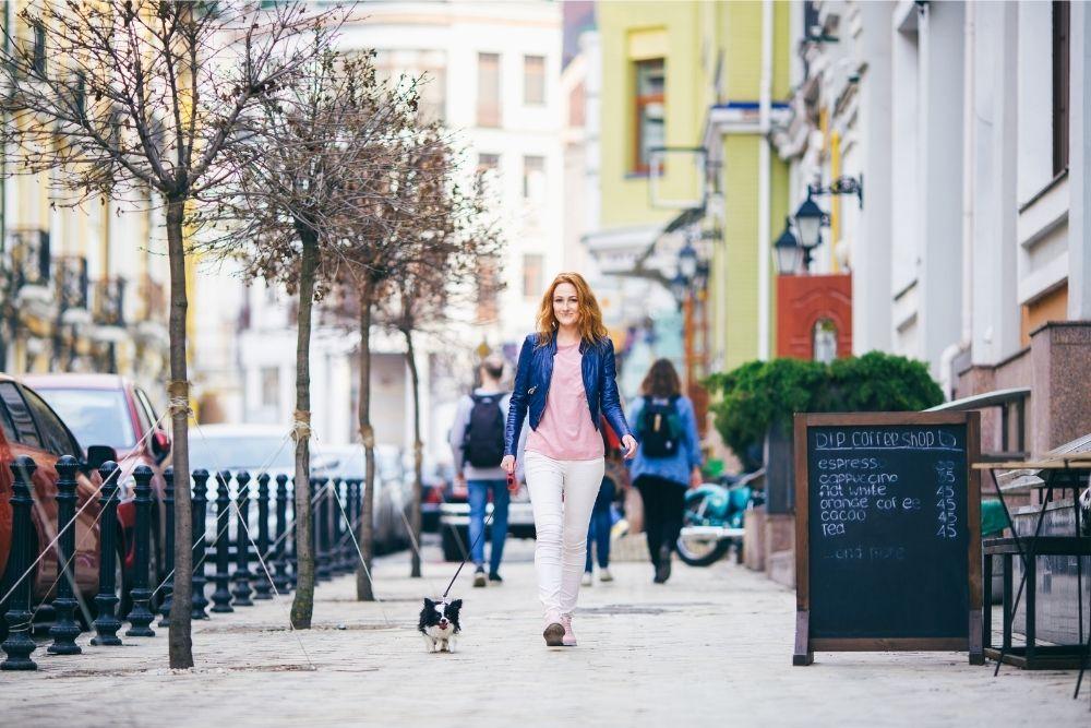 dog-outdoor-activity-explore-city