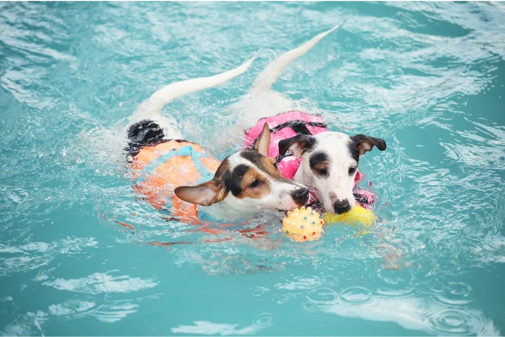 dog-outdoor-activity-swimming
