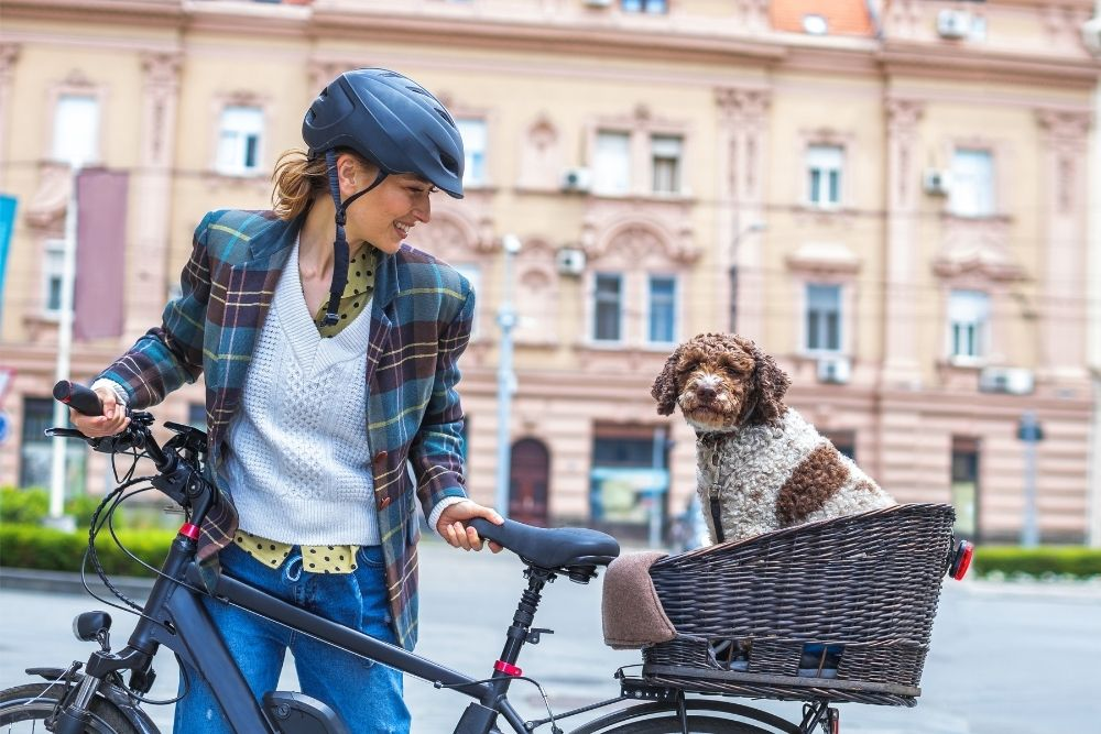 dog-outdoor-fun-bike-ride