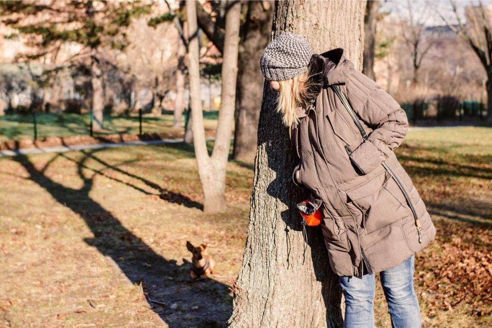 dog-outdoor-hide-and-seek